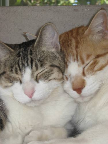 We love to cuddle! Click on our photo to learn more!
