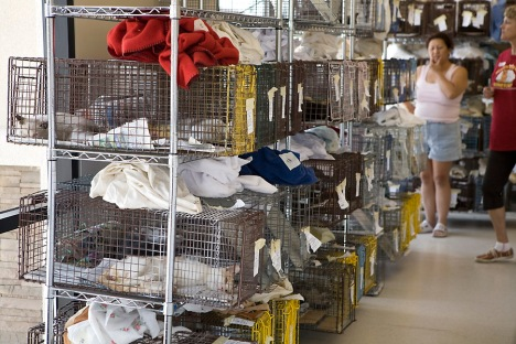 270 Cats and Kittens were sterilized in one day at the Heaven Can Wait Feral Cat Clinic