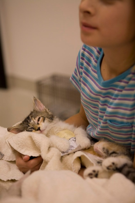 Heaven Can Wait Volunteer helping a kitten gently wake up after surgery