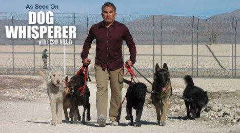 dog_whisperer