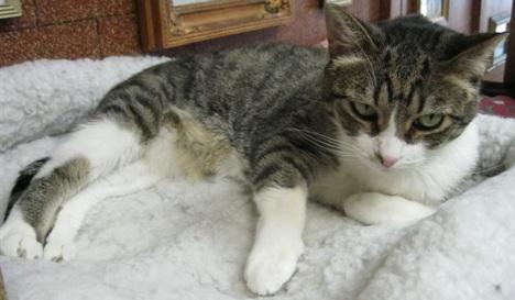 Petsmart Cat Adoption Las Vegas