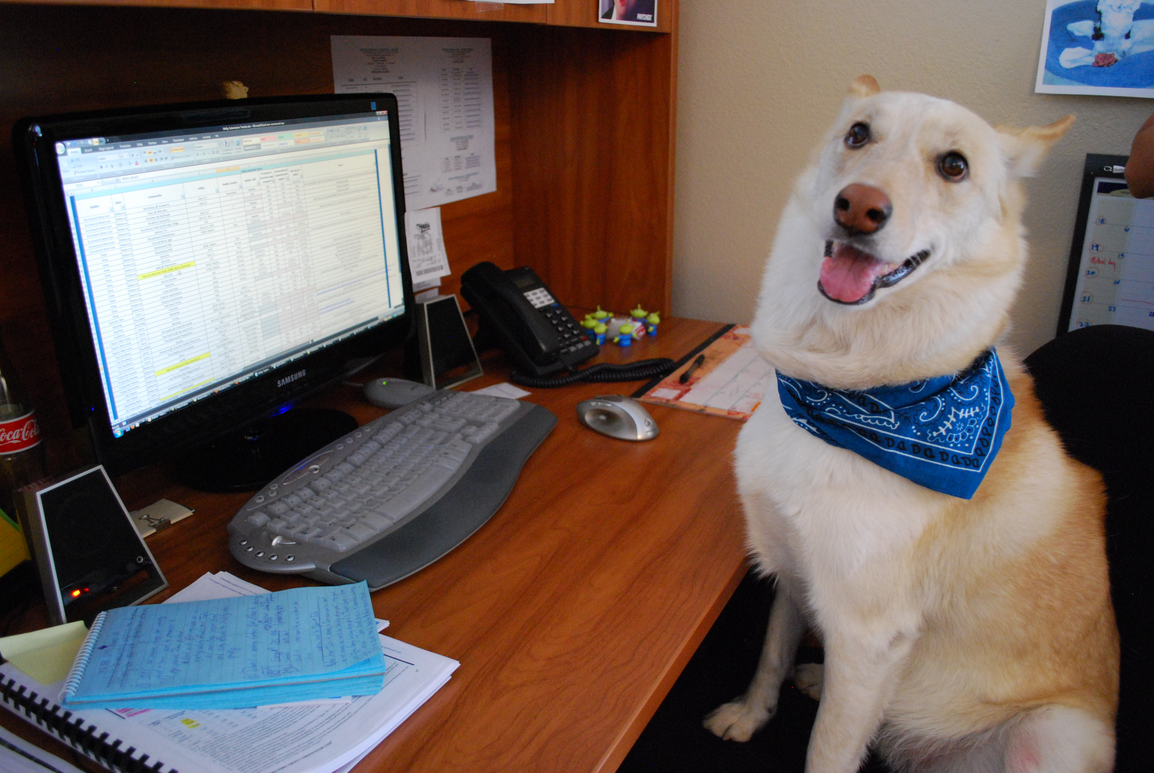 take your dog to work day one dog s story from the office