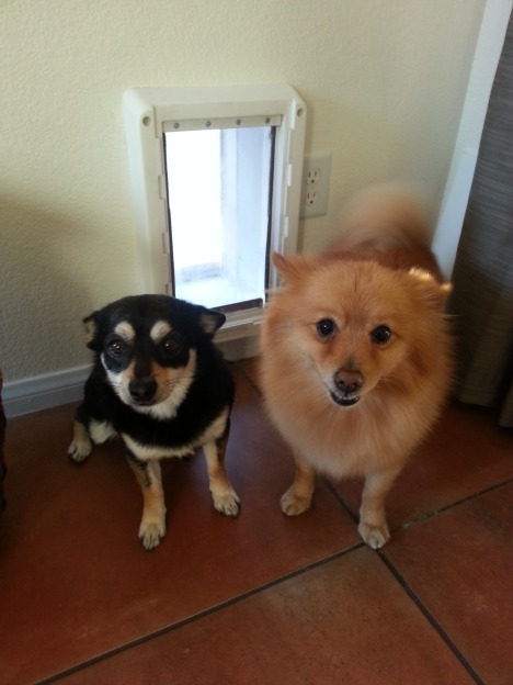 A doggie door gave Connor (left) and Maximus (right) the opportunity for a new home.