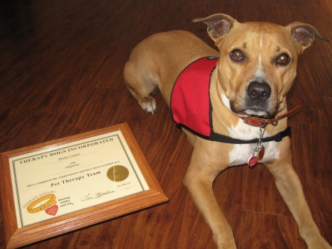 Odyssey became a Certified Therapy Dog.
