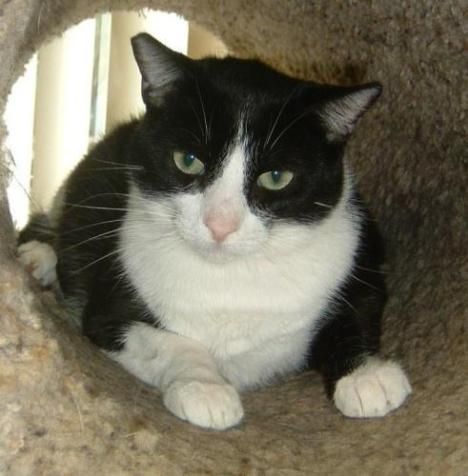 Cats like Magoo, who are waiting to be adopted, get to enjoy toys, food, bedding and more when they are donated.